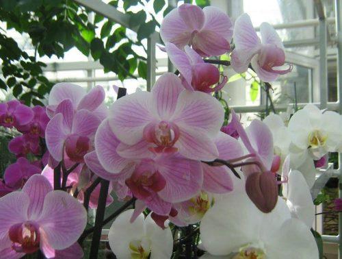 тропические растения дома